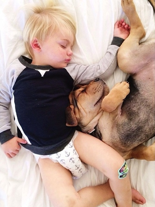 puppy dog taking a nap with baby